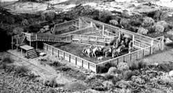 Campbell DD Cattle loading pen, LIST PRICE $52.9