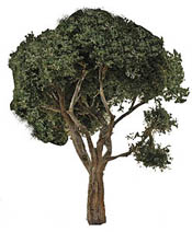 "Grand Central Gems Hardwood Tree-Extra-Large 8-10"" Tall (2), LIST PRICE $25"