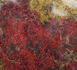Labelle MIXED RED/YELLOW LICHEN 1.5 OZ BAG, LIST PRICE $2.39