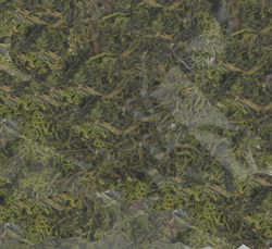 Labelle LIGHT GREEN LICHEN 4 OZ BAG, LIST PRICE $5.99