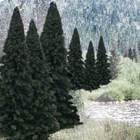 "Woodland Scenics 2 4""RM REAL EVERGREEN BL 18/PK, LIST PRICE $34.99"