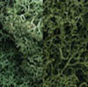 Woodland Scenics LIGHT GREEN MIX LICHEN, LIST PRICE $18.99